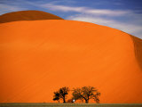 Tree in the Namib Desert, Namibia