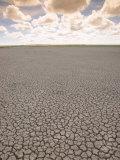 Parched Earth, Etosha National Park, Namibia