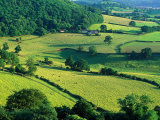 Rolling Countryside