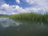 Clouds Fill the Sky over a Marsh of Aquatic Grasses
