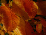 Close-up View of Autumn Leaves