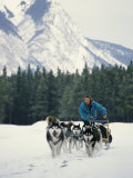 A Woman Driving a Dogsled in a Forest