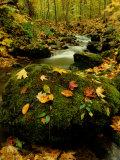 Fallen Leaves on Rocks Next to a Mountain Stream