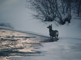 Winter View of a Deer Near the River