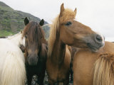 Horses Stand Close to One Another