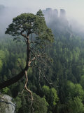 Scenic View of a Gnarled Tree