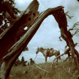 Rancher Leading Horse Across Field as Seen Through Branches of Fallen Tree, Trinchera Ranch