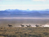 Band of Wild Horses Taking Flight Across Western Sage