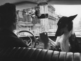 Woman Taxi Driver Sharing Front Seat with Pet Dog