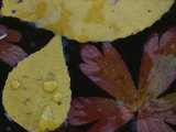 Close View of Fall Leaves in a Pool of Water
