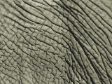 A Close View of an African Elephants Skin