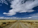 Sheep Crossing a Dirt Road in Western Utah