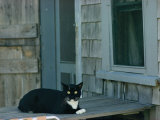 A Cat Sits on a Porch