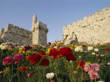 A View of Flowers Growing Outside a Castle
