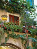 Grape Arbor and Flowers, Lake Garda, Malcesine, Italy