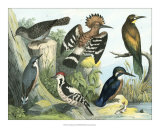 Avian Collection II
