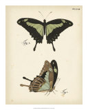 Butterfly Profile III