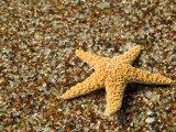 Glass Beach with Star Fish, Kauai, Hawaii, USA
