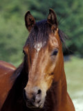 Horse Portrait, Oregon, USA