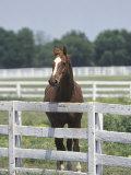 Thoroughbred Race Horse, Kentucky Horse Park, Lexington, Kentucky, USA