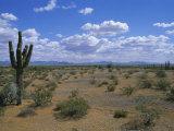 Saguaro Cactus and a Cloudy Sky