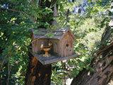 Church Bird House Hanging in a Tree, Sutter Creek, California