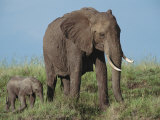 An African Elephant with Her Calf