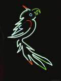 A Pale Green Neon Parrot