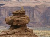A Mountain Lion Walks Atop a Circular Rock Formation