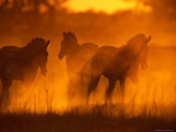 Zebras Silhouetted in a Dust Cloud