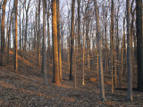 Trees Minus Their Leaves Dot a Hillside in the Park