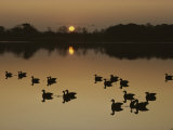 Canada Geese Silhouetted on the Chester River at Sunset