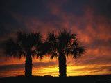 The Silhouette of a Pair of Palm Trees at Sunset