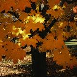 Leaf Color Change in Whitnall Park