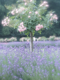 Flowering Tree Above Beautiful Purple Flowers