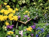 Daffodil, Primrose, and Grape Hyacinth
