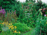 Hazel Plant Support with Runner Beans