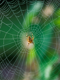 Spider in the Middle of Cobweb, September