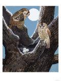 Owls Nest