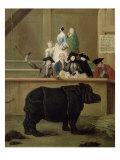 The Rhinoceros, 1751