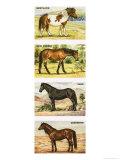 Wild Ponies of Great Britian