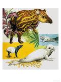 The Malayan Tapir and Atlantic Grey Seal