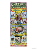 Poster Advertising the Collection de Rares Animaux Sauvages For the Barnum and Bailey Circus