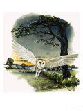 Barn Owl in Flight, Illustration from Peeps at Nature, 1963