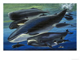 The Whale Family, Illustration from From Once Upon a Time, 1971