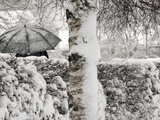 A Man with a Umbrella Walks by Snowy Trees During Heavy Snowfall
