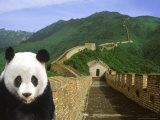 Panda at the Great Wall of China