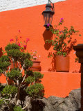 Colorful Wall with Lantern and Potted Plants, Guanajuato, Mexico