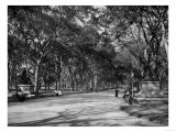The Mall in Central Park in New York City Photograph - New York, NY