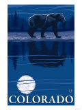 Bear in Moonlight - Colorado